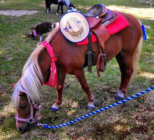 deco pony